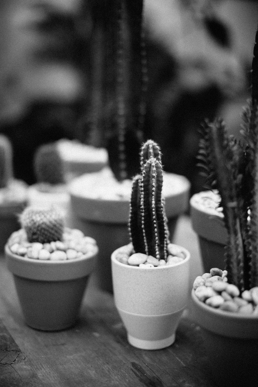 plantshed-9695.jpg