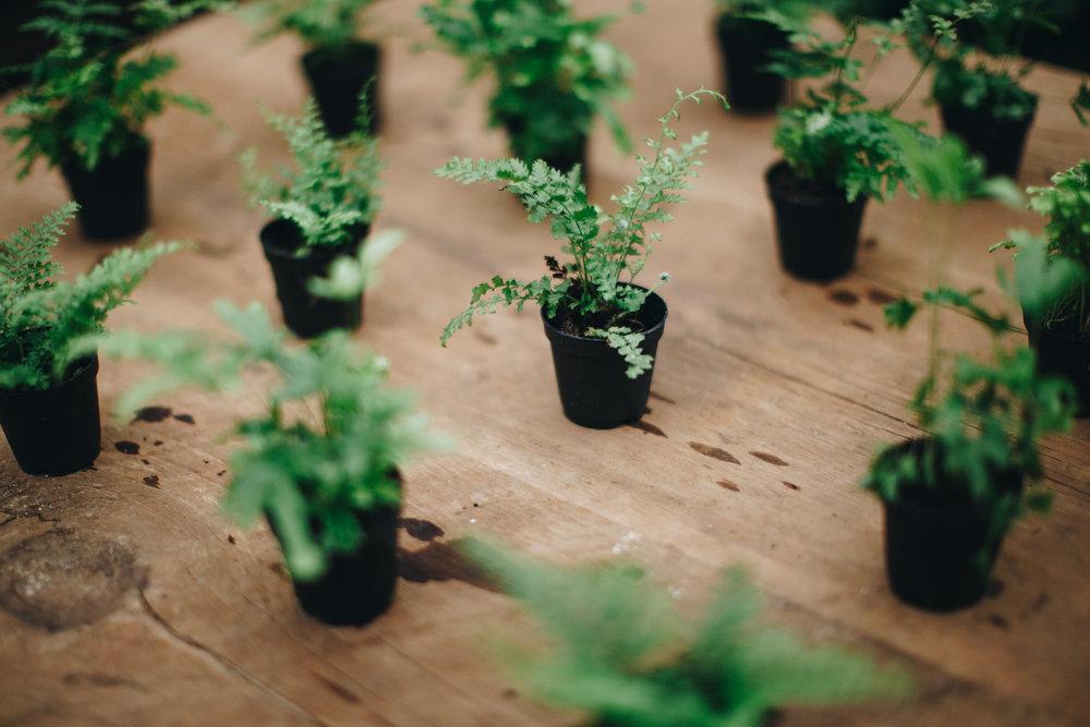 plantshed-9612.jpg