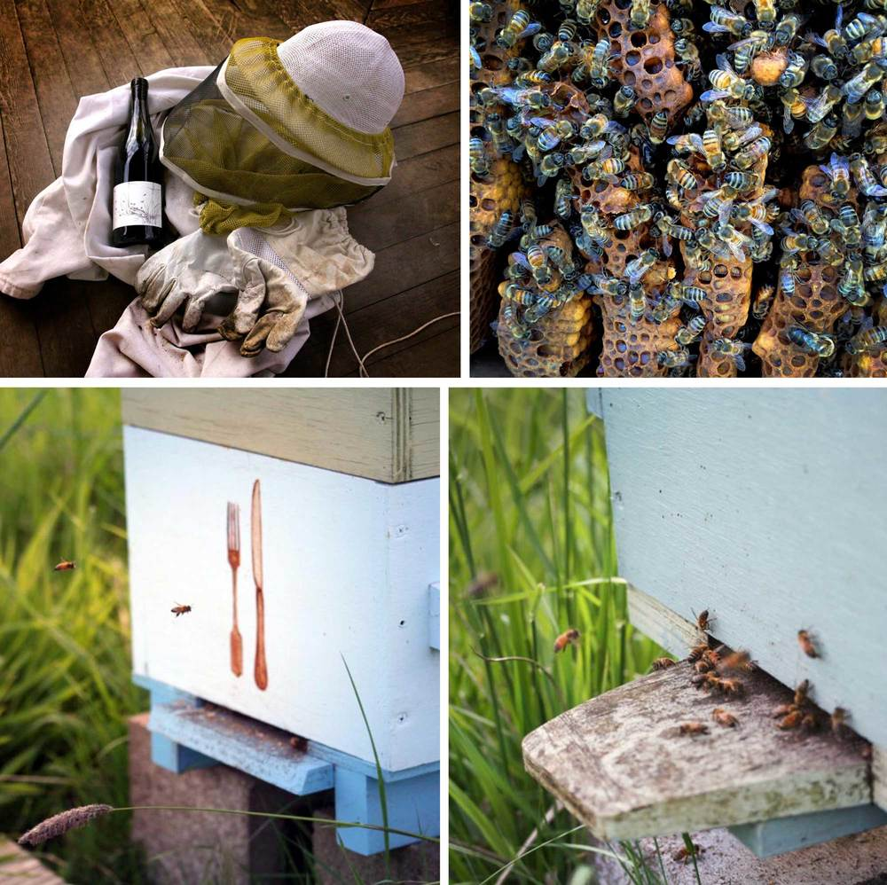 Big-Table-Farms-Bee-Collage-web.jpg