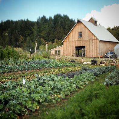 barn-garden-square.jpg