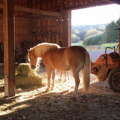 horse-barn-web.jpg