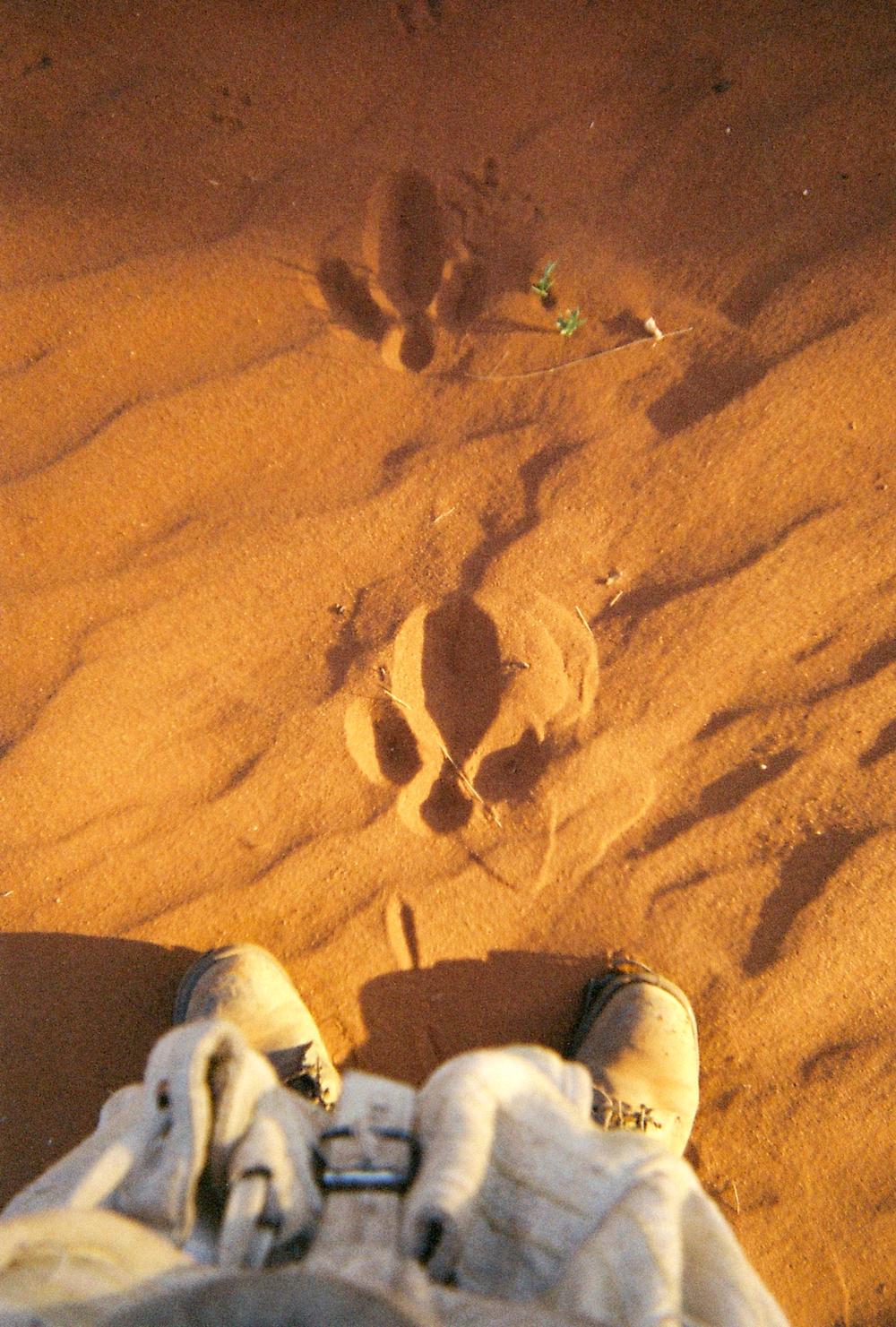 foothead (15).jpg