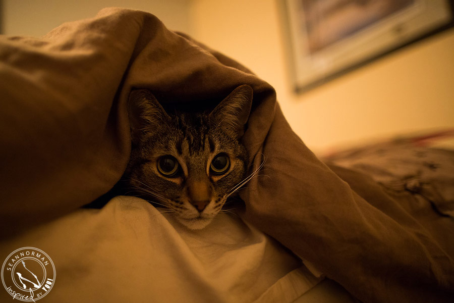 How cold was it in Yellowknife? Have you ever seen a cat crawl completely underneath a duvet to sleep? That's how cold.