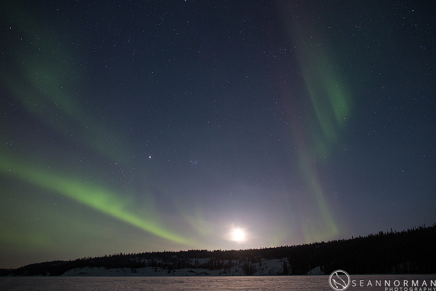 canada goose northern lights