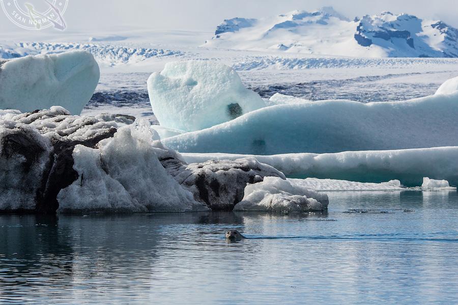 Iceland Jökulsárlón - Walking on Ice Again - 6