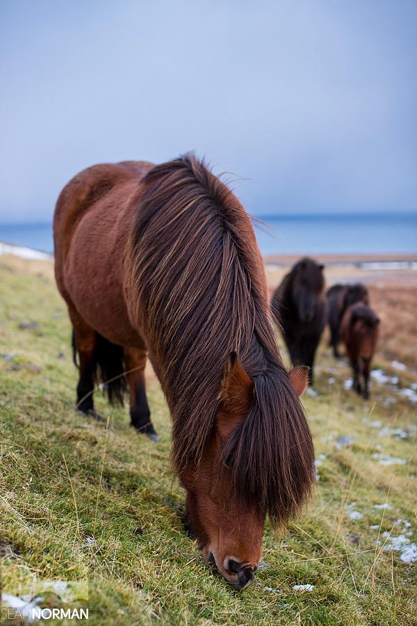 Iceland-Dynjandi-and-the-Westfjords-17.jpg