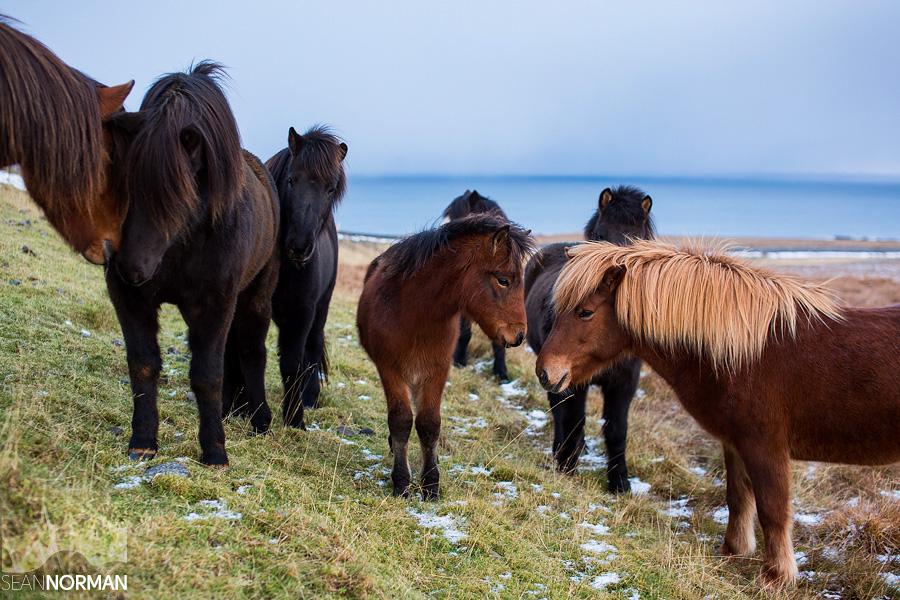 Iceland-Dynjandi-and-the-Westfjords-18.jpg