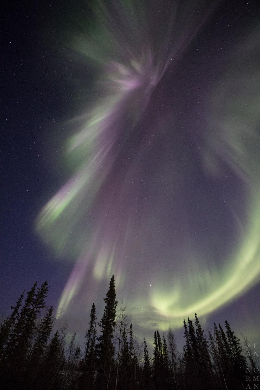 Yellowknife Aurora Hunting Tour - 4.jpg