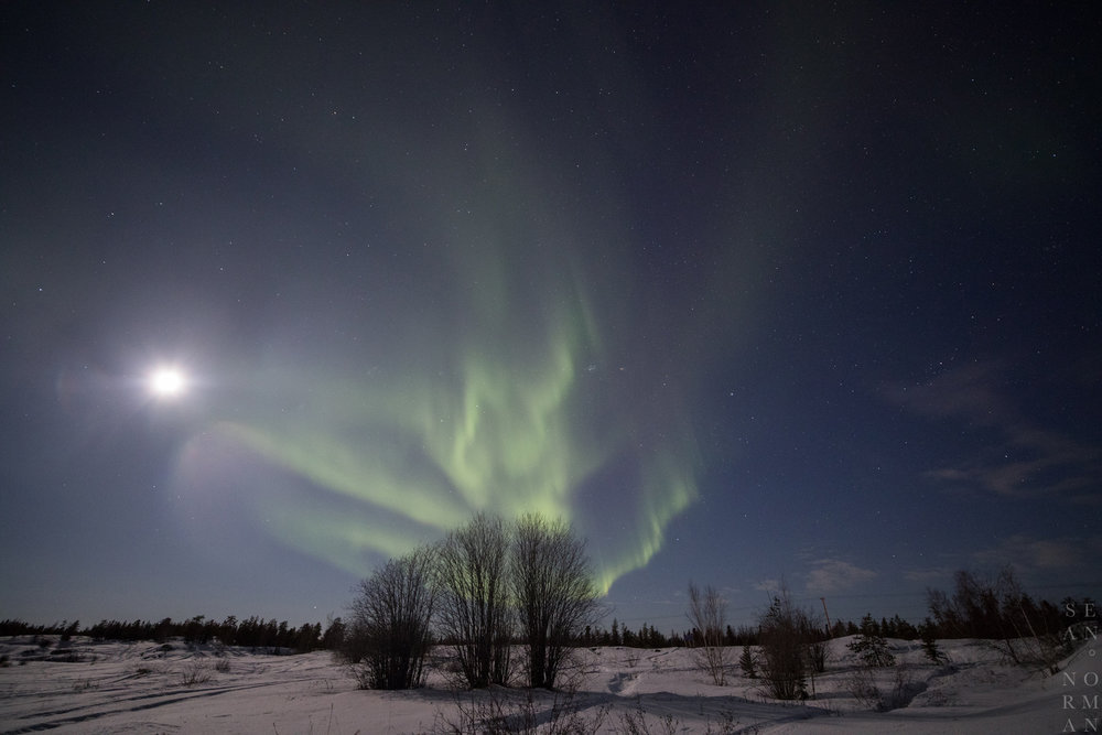Yellowknife Aurora Borealis - 3.jpg