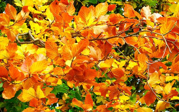 Autumn Leaves, Dixon Park Belfast by Albert Bridge used under Creative Commons