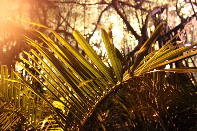 Urban tropical paradise