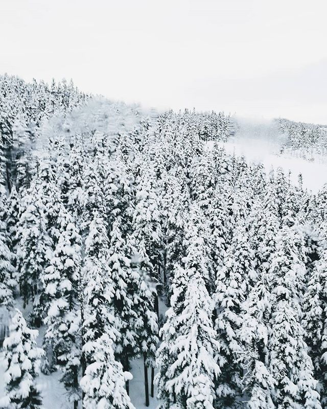 When there's so much snow you feel like you're in a black and white film . . . . . #snow #trees #skiing #bw #outdoors #adventure #whistler #canada #winter #travel #cold #January #nature #frozen