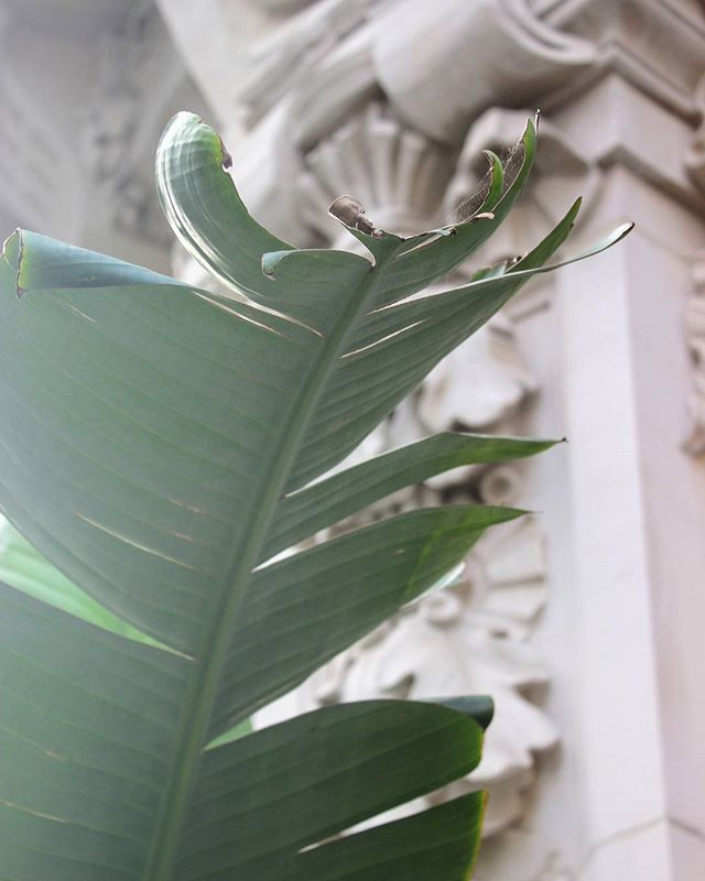 Bourgeois x chill vibes . . . . . #palmtrees #architecture #ornate #bourgeois #contrast #plants #green #Paris #travel