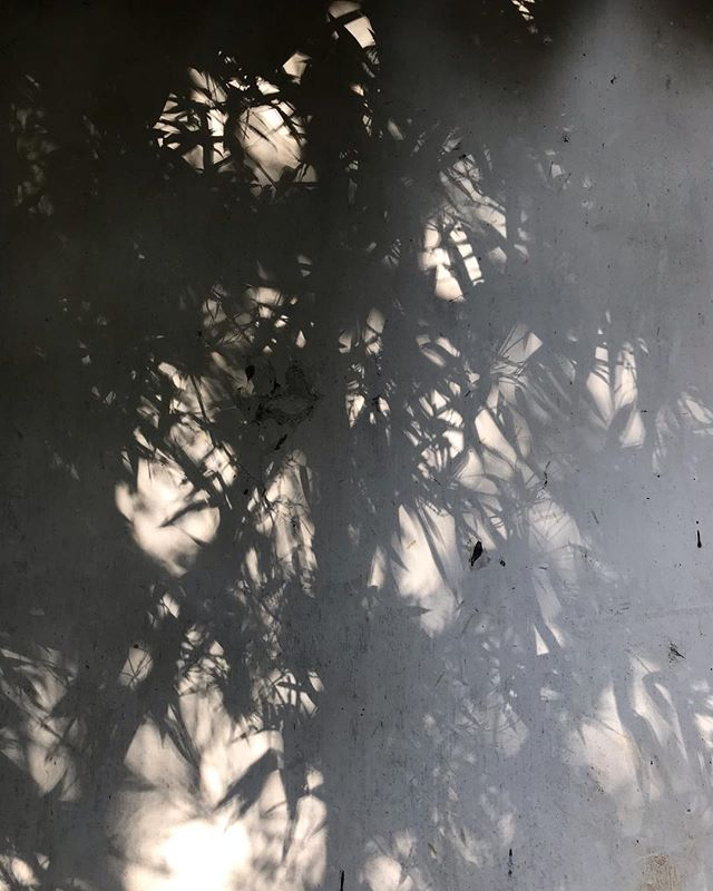 These inky shadows made me think of the advice of Guo Xi, an eleventh century Northern Song Dynasty painter. Take a bamboo shoot on a moonlit night and reflect upon its shadow on a white wall 'then the true form of the bamboo will appear.' #liongrovegarden