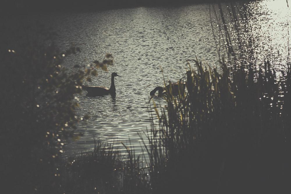 fleet-pond-elvetham-heath-hampshire-wedding-photographer-4.jpg