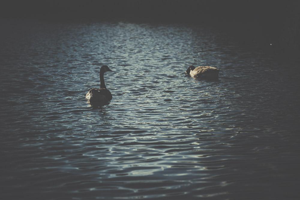fleet-pond-elvetham-heath-hampshire-wedding-photographer-5.jpg