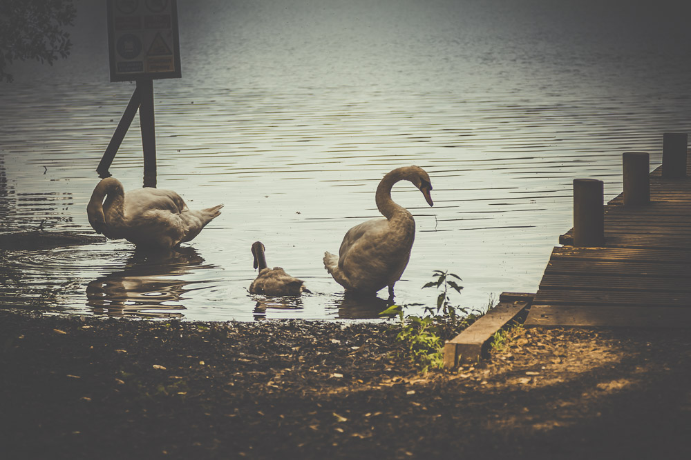 fleet-pond-elvetham-heath-hampshire-wedding-photographer-24.jpg
