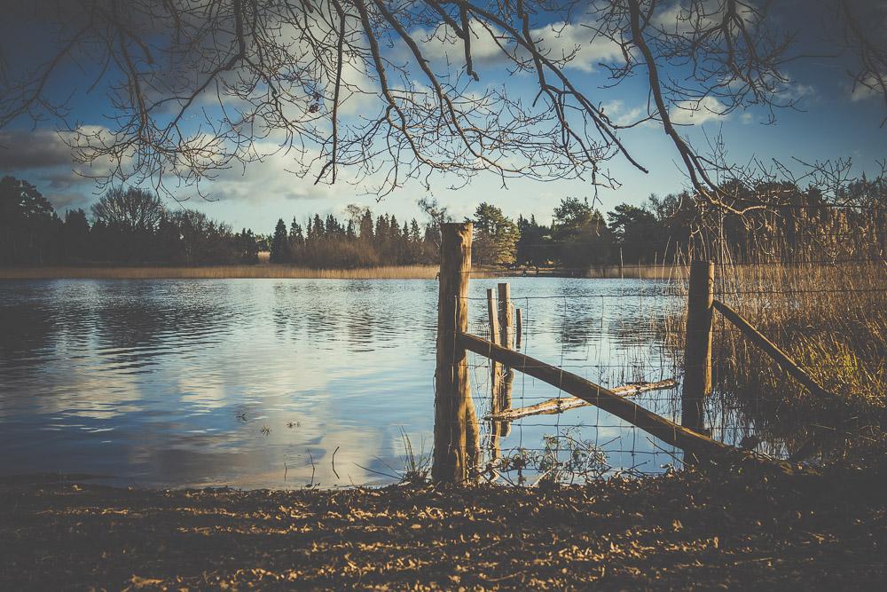 frensham-liitle-pond-and-great-pond-surrey-hampshire-wedding-photographer-2.jpg