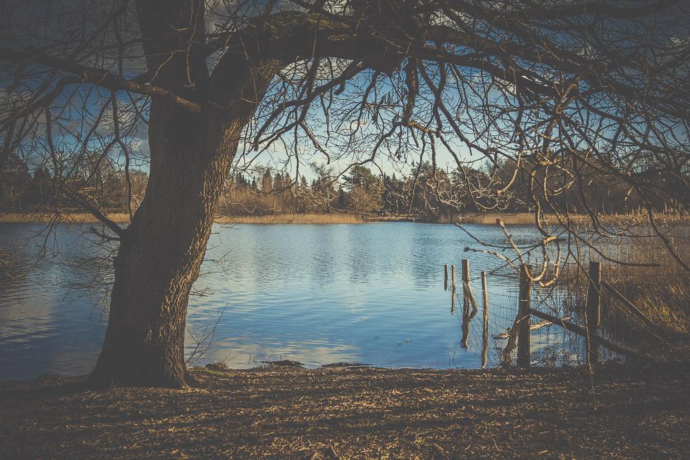 frensham-liitle-pond-and-great-pond-surrey-hampshire-wedding-photographer-1.jpg