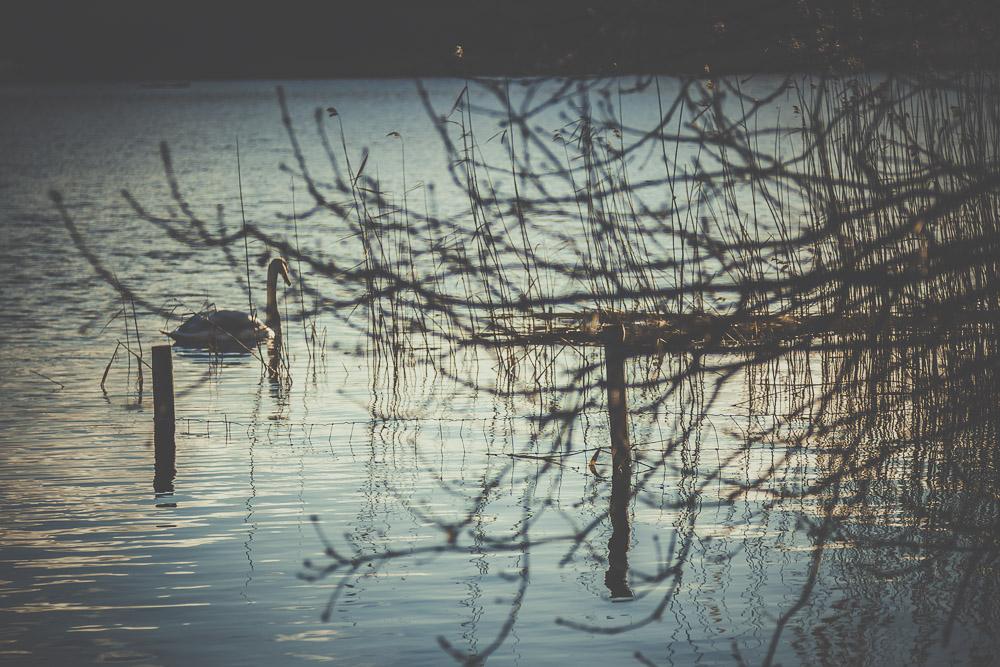 frensham-liitle-pond-and-great-pond-surrey-hampshire-wedding-photographer-4.jpg