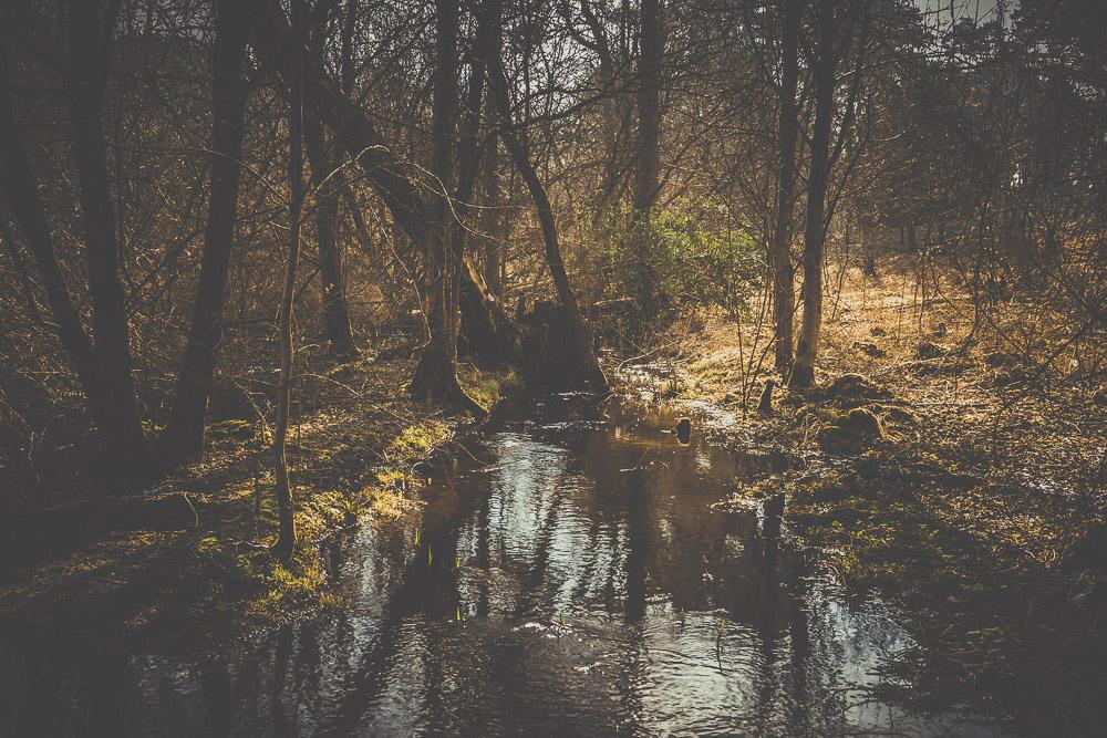 frensham-liitle-pond-and-great-pond-surrey-hampshire-wedding-photographer-25.jpg