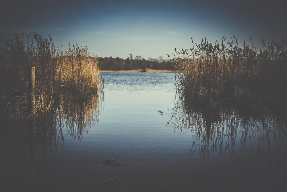 frensham-liitle-pond-and-great-pond-surrey-hampshire-wedding-photographer-35.jpg