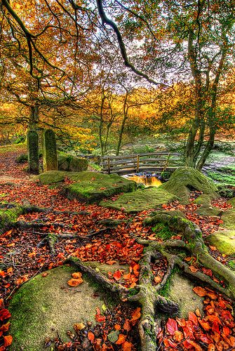Autumnal Britain 8