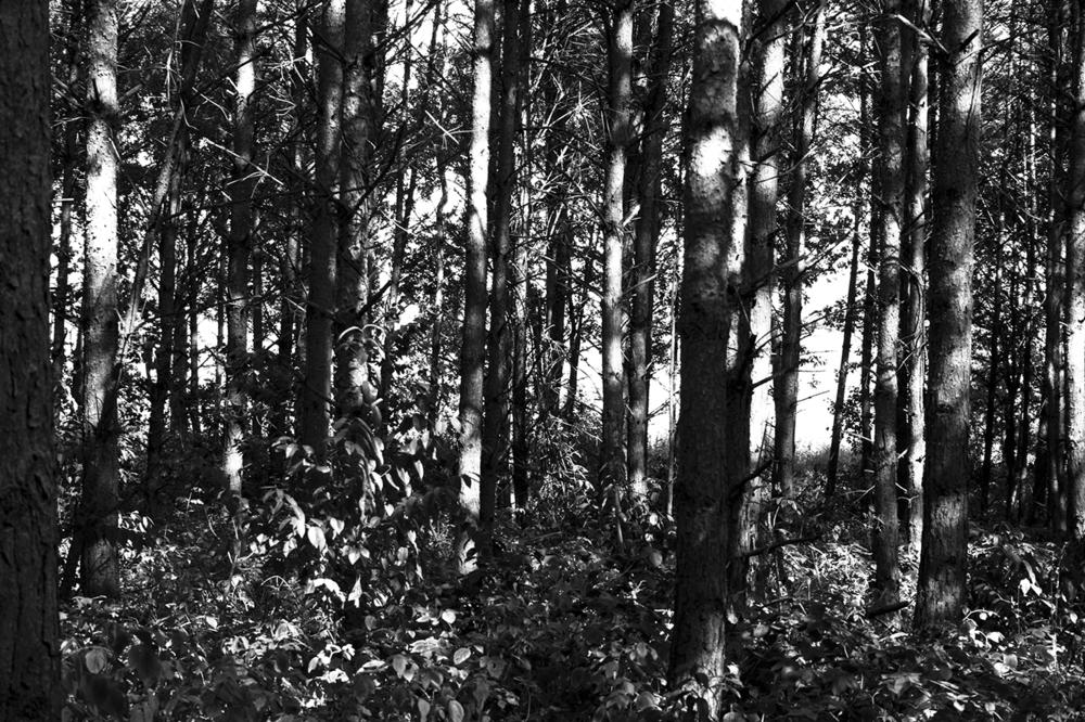 029_Schatten_2009.jpg