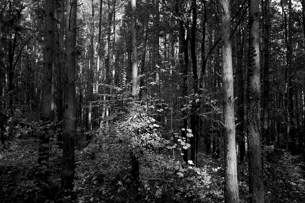 076_Schatten_12_11_2009.jpg