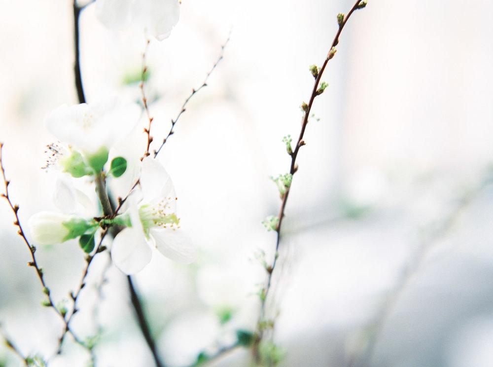 bryllupsfotograf_filmhybrid_-36.jpg