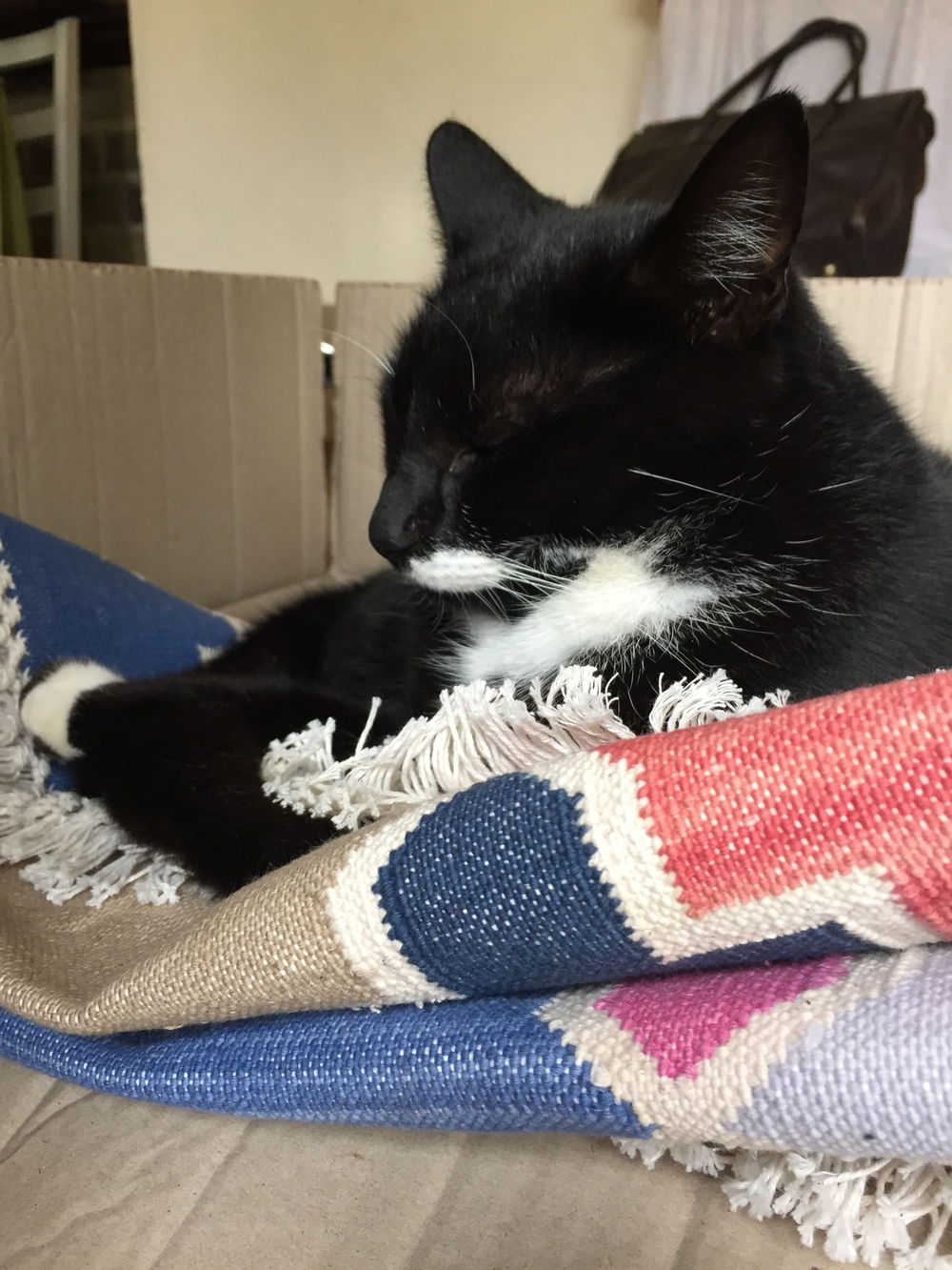 Charles enjoys a snooze in a box of rugs.