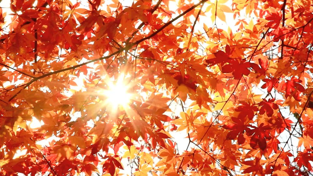 sun-shining-through-autumn-leaves-footage-012614022_prevstill.jpg