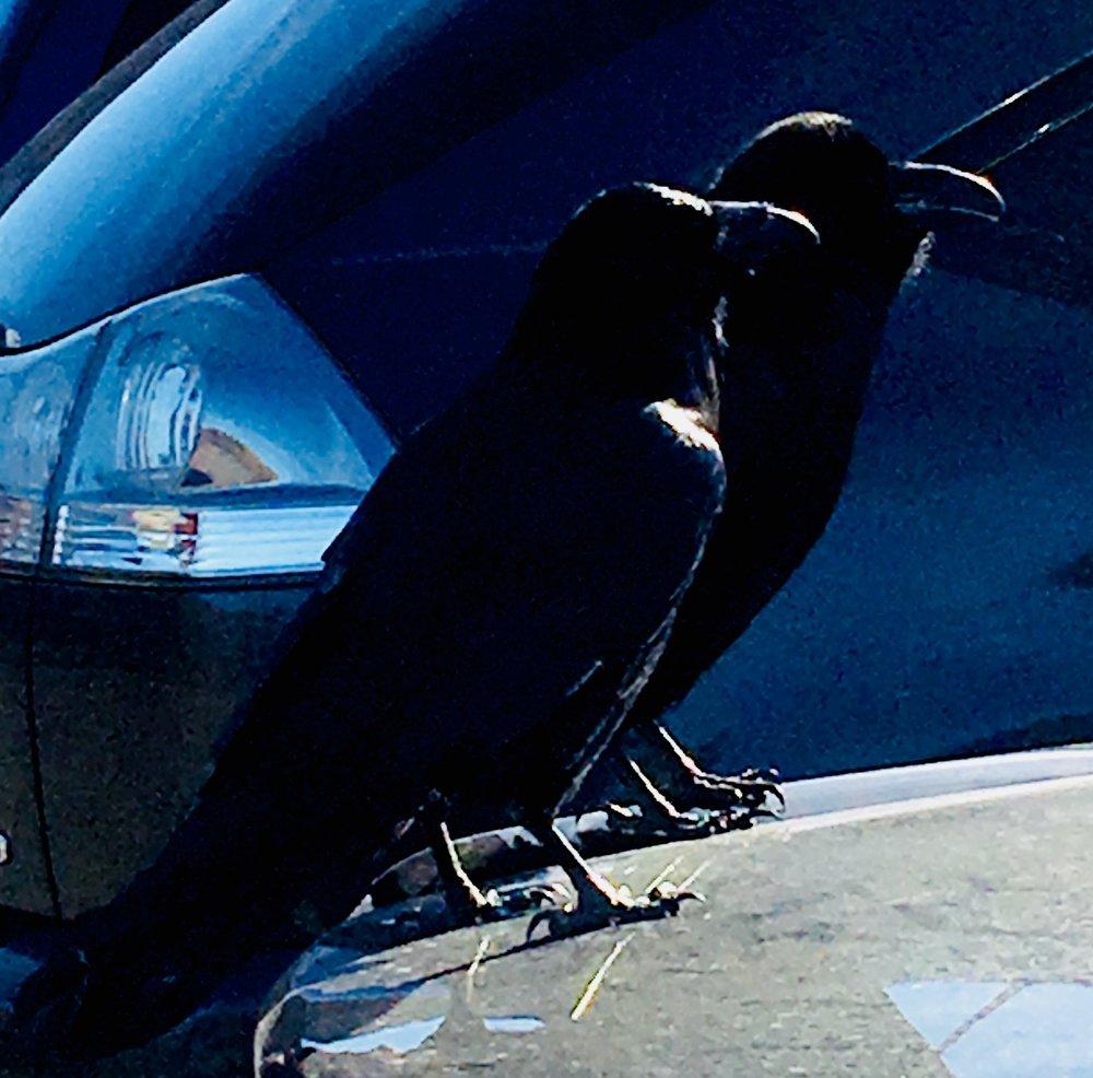 ravens (1).jpg