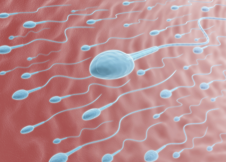 Insemination with husband or donor sperm