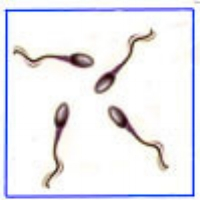Research suggest sperm quality is going down across the western world.