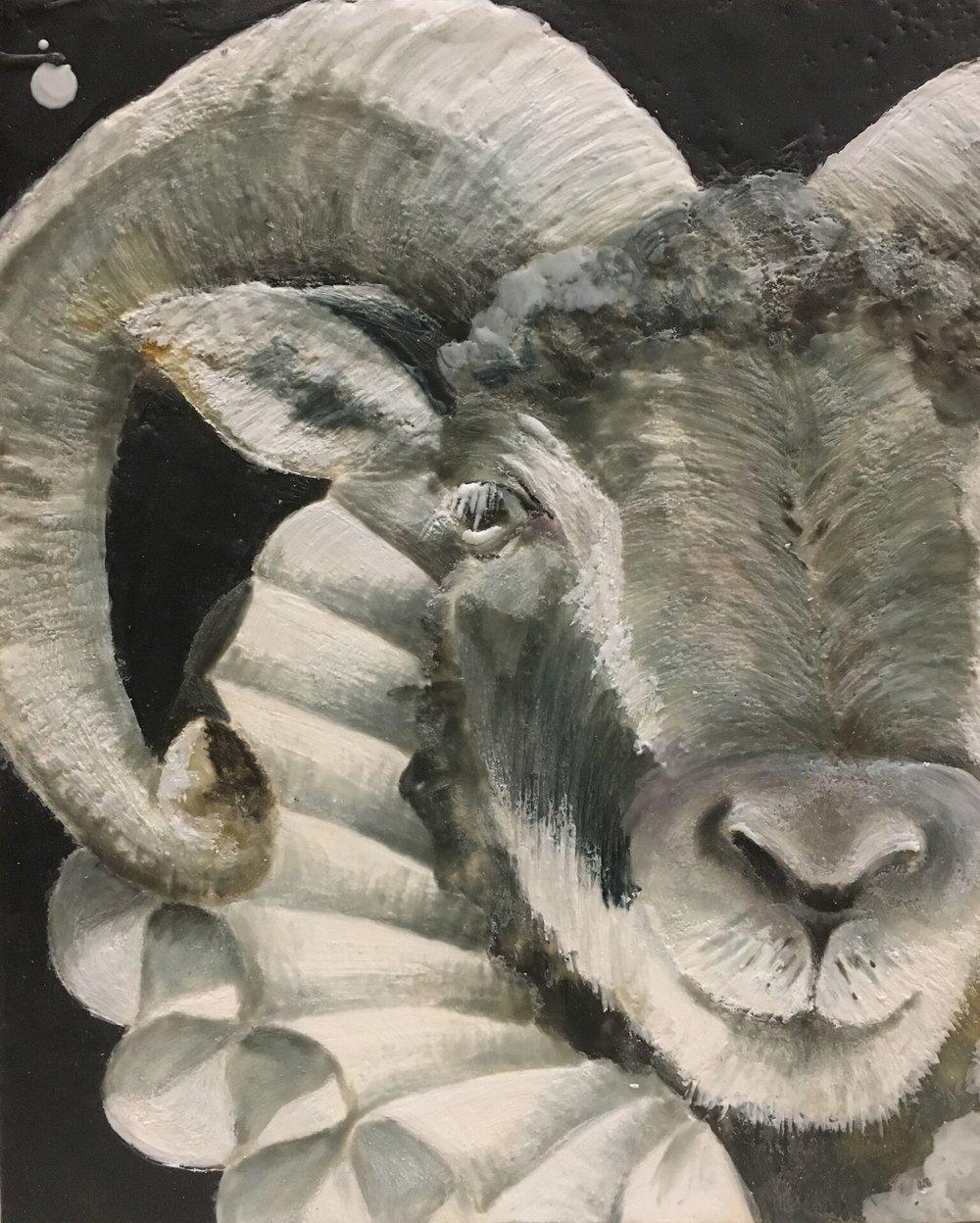 Ruffled Ram 8x10 $250