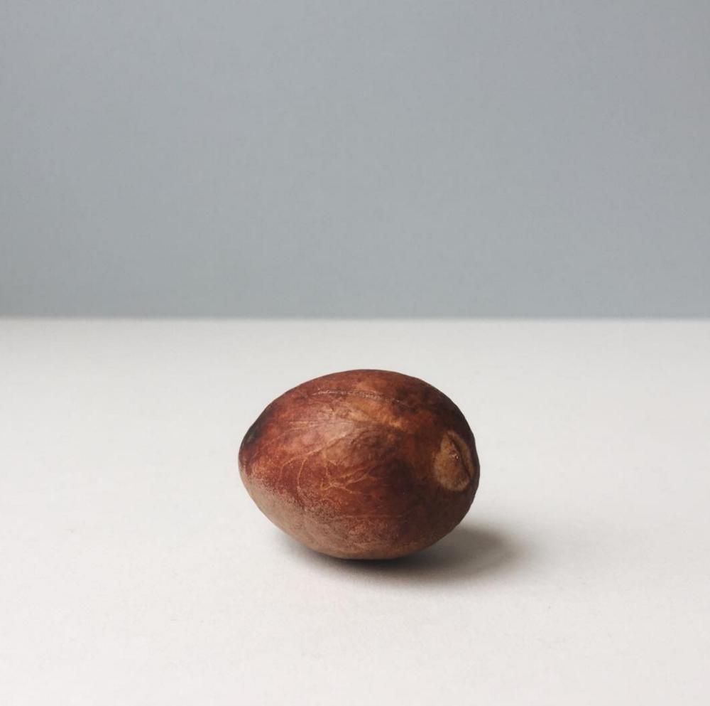 avocado-pip.jpg