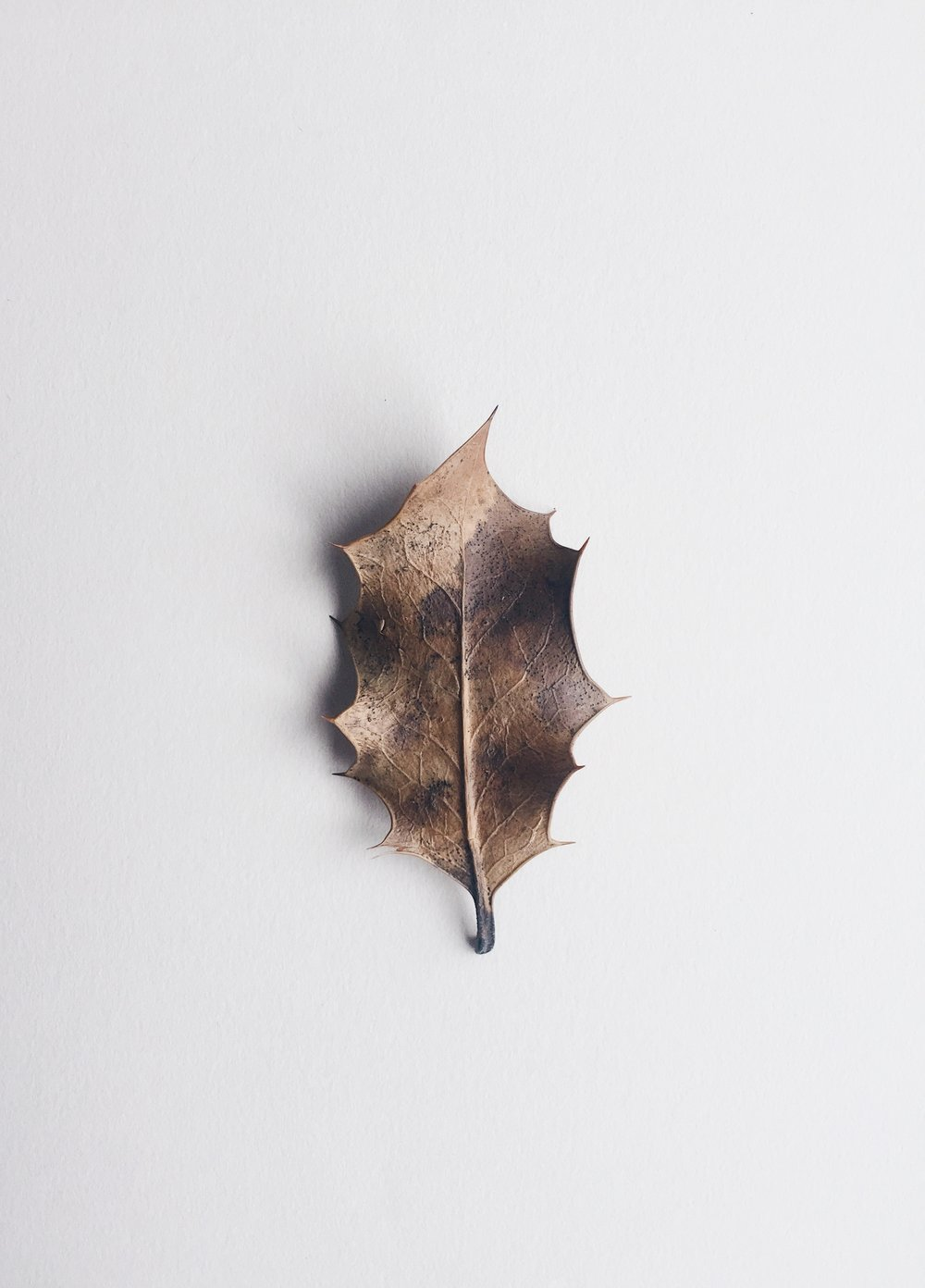 autumn-leaf.jpg