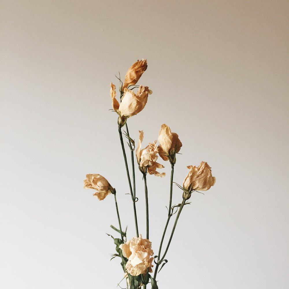 dried-flowers.jpg
