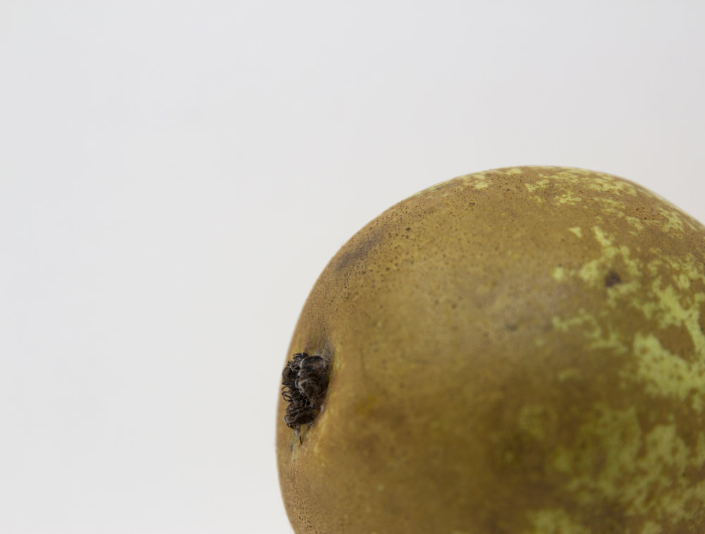 A simple, minimalist, contemporary, fine art clue-up photograph of a pear
