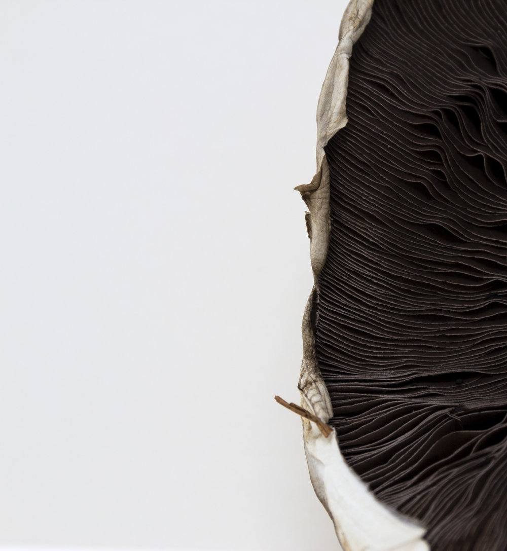 A simple, minimalist, contemporary, fine art clue-up photograph of a mushroom
