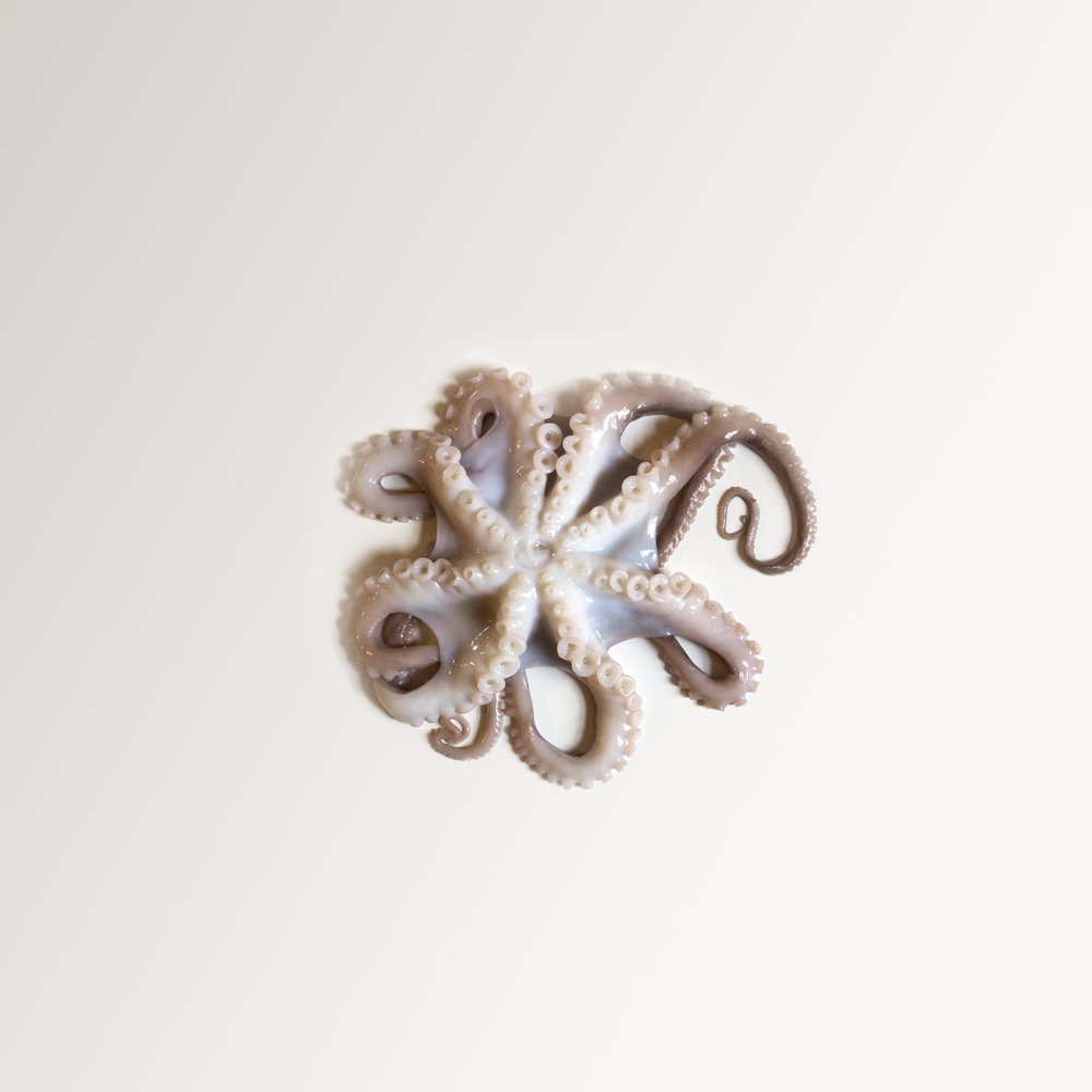 A simple, minimalist, contemporary, fine art photograph of an octopus