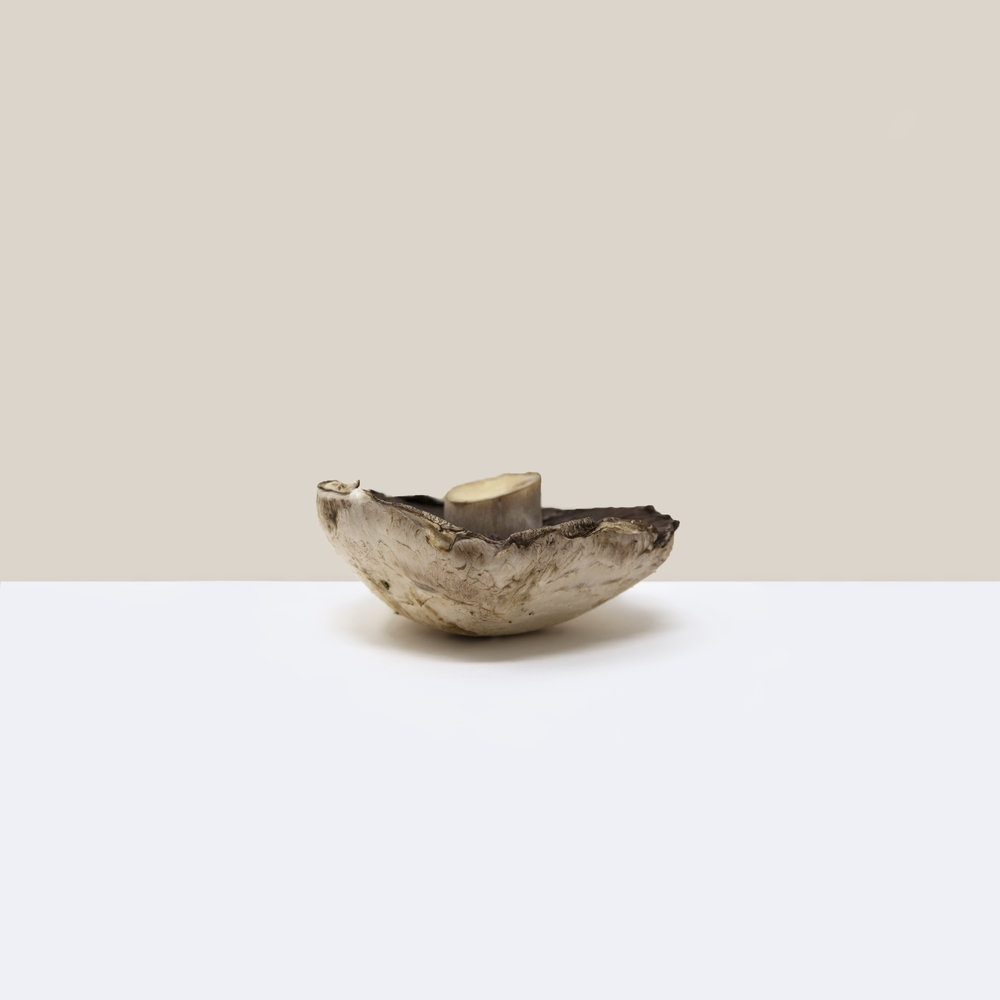 A simple, minimalist, contemporary, fine art photograph of a mushroom