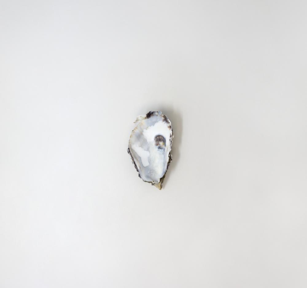 oyster-shell.jpg