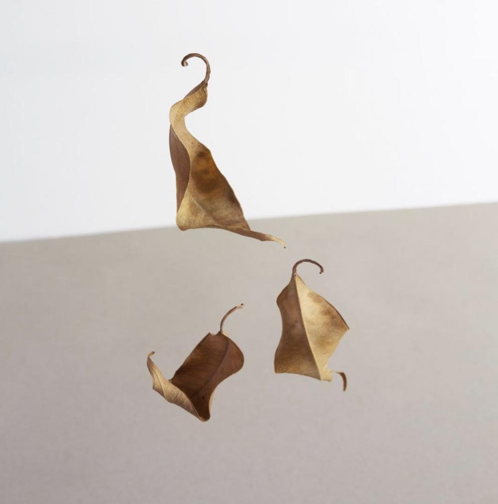 minimalist-falling-leaves.png