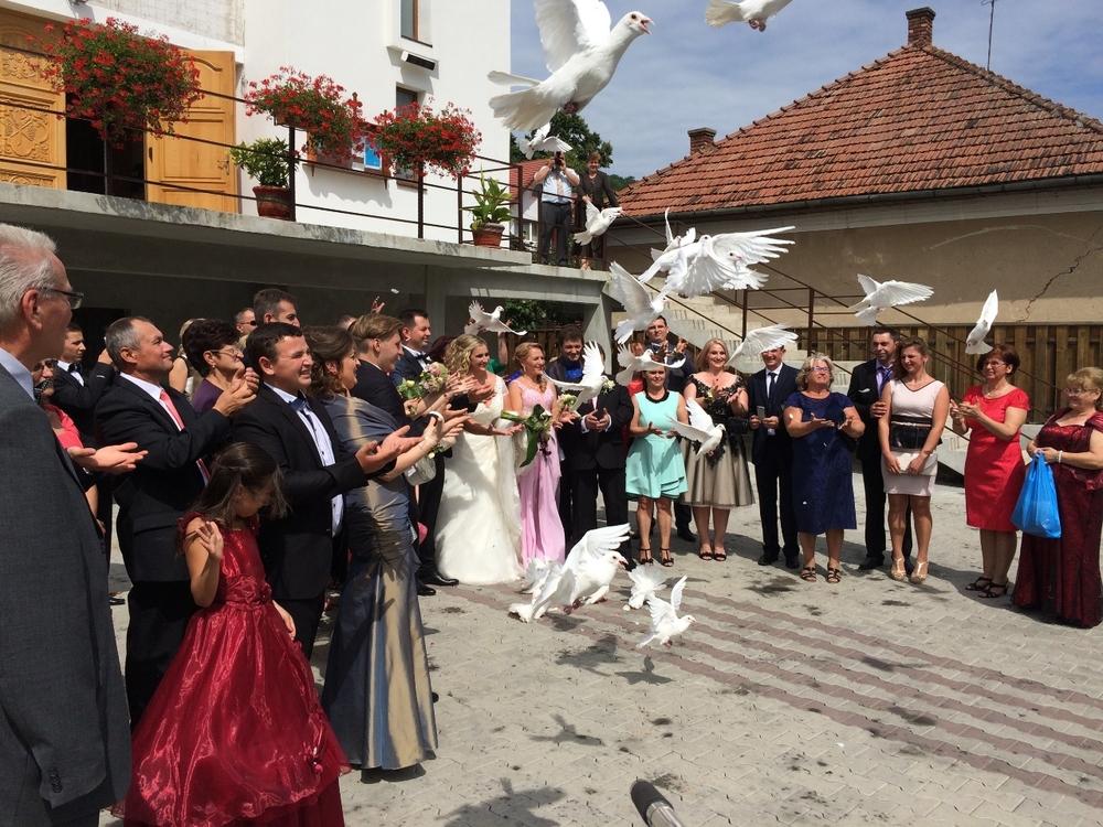 porumbei albi nunta evenimente cluj napoca event planner.JPG