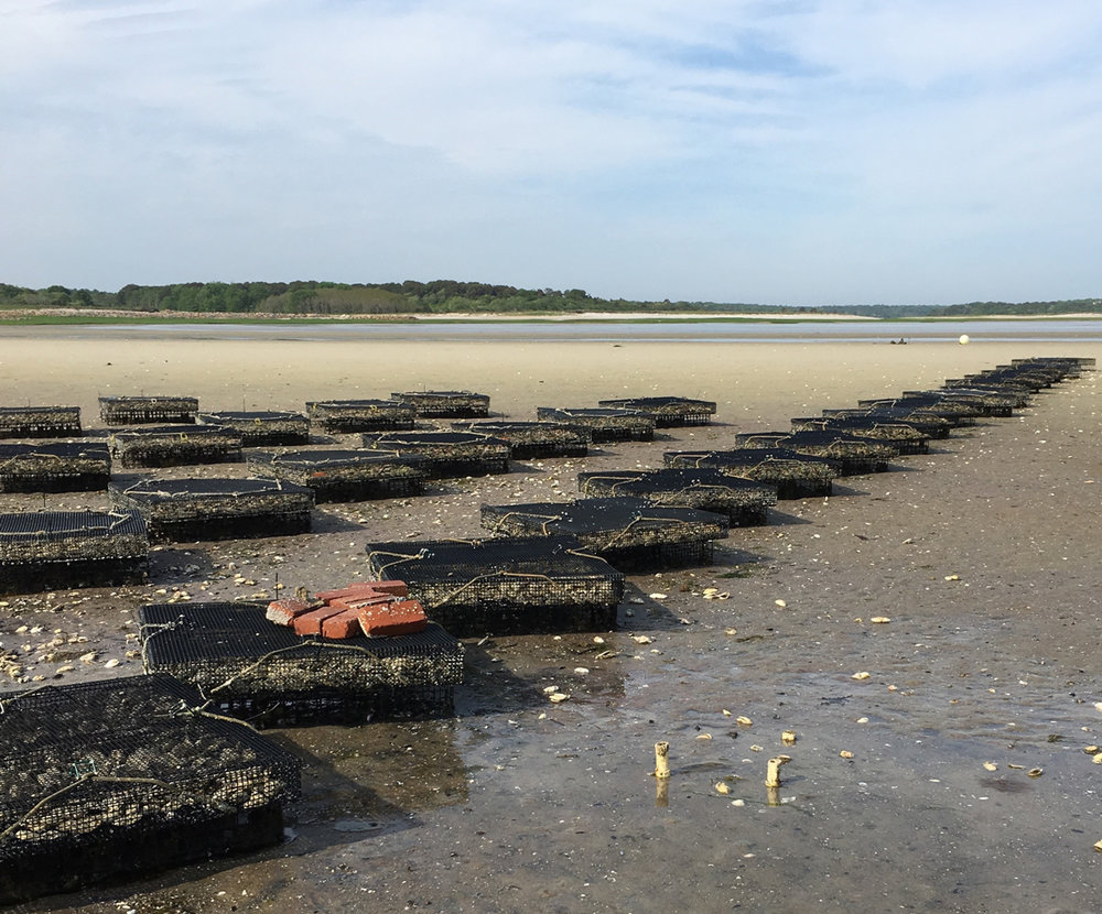 PAINES CREEK OYSTER COMPANY I HAVE BEEN GOING TO THE BREWSTER FLATS FOR MANY YEARS BUT I HAD NEVER SEEN THE OYSTER BEDS UP CLOSE UNTIL I MET JOEY WERZANSKI THE OWNER OF PAINES CREEK OYSTER COMPANY.  READ THE STORY