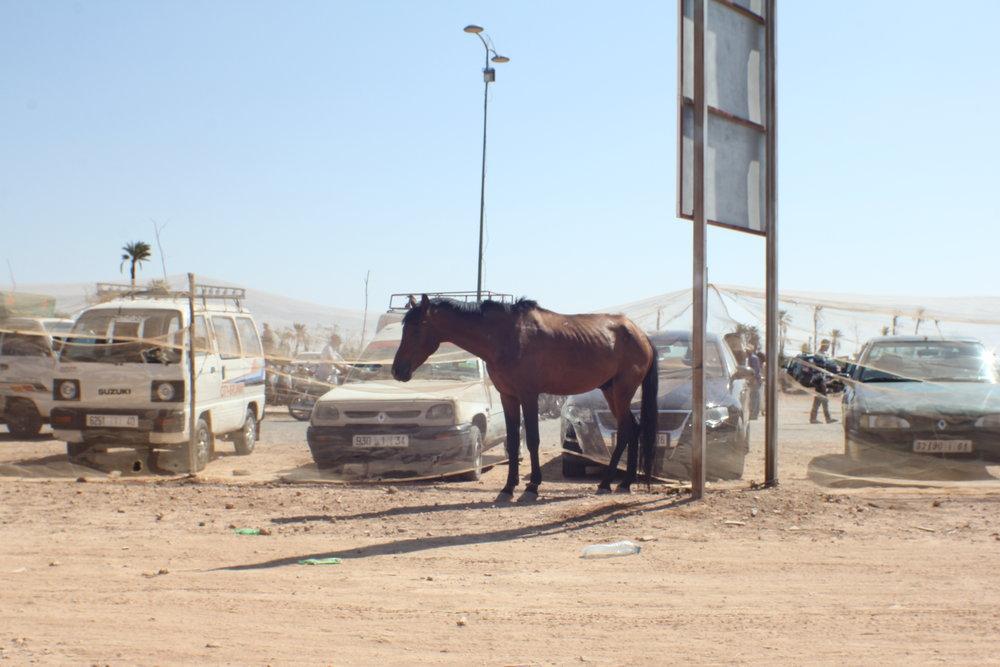 Horse, Marrakesh, Marocco 2017