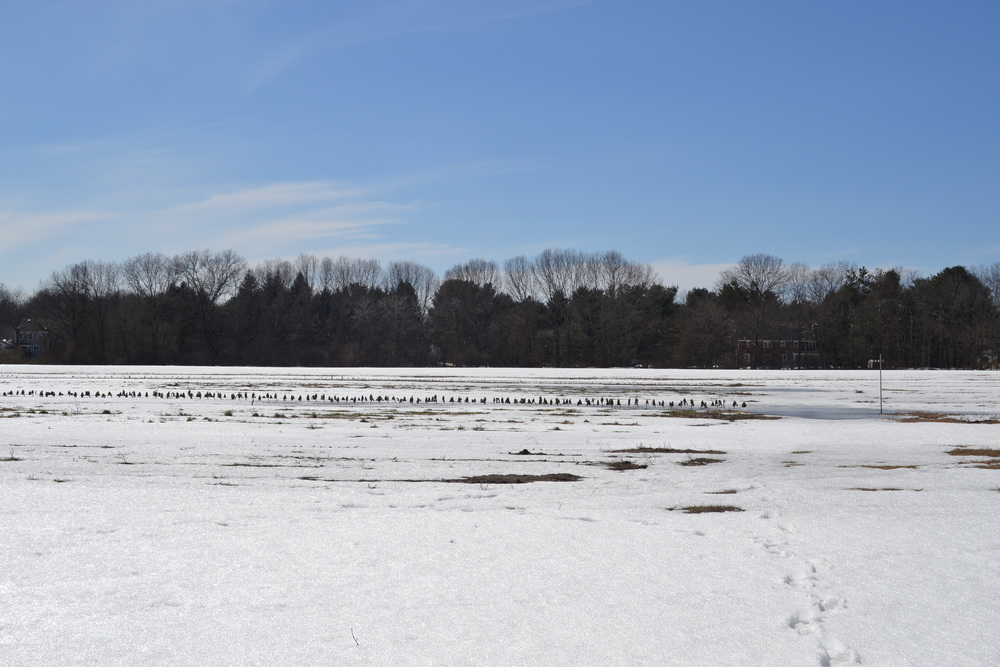 Melting snow on our main vegetable field on April 1st.