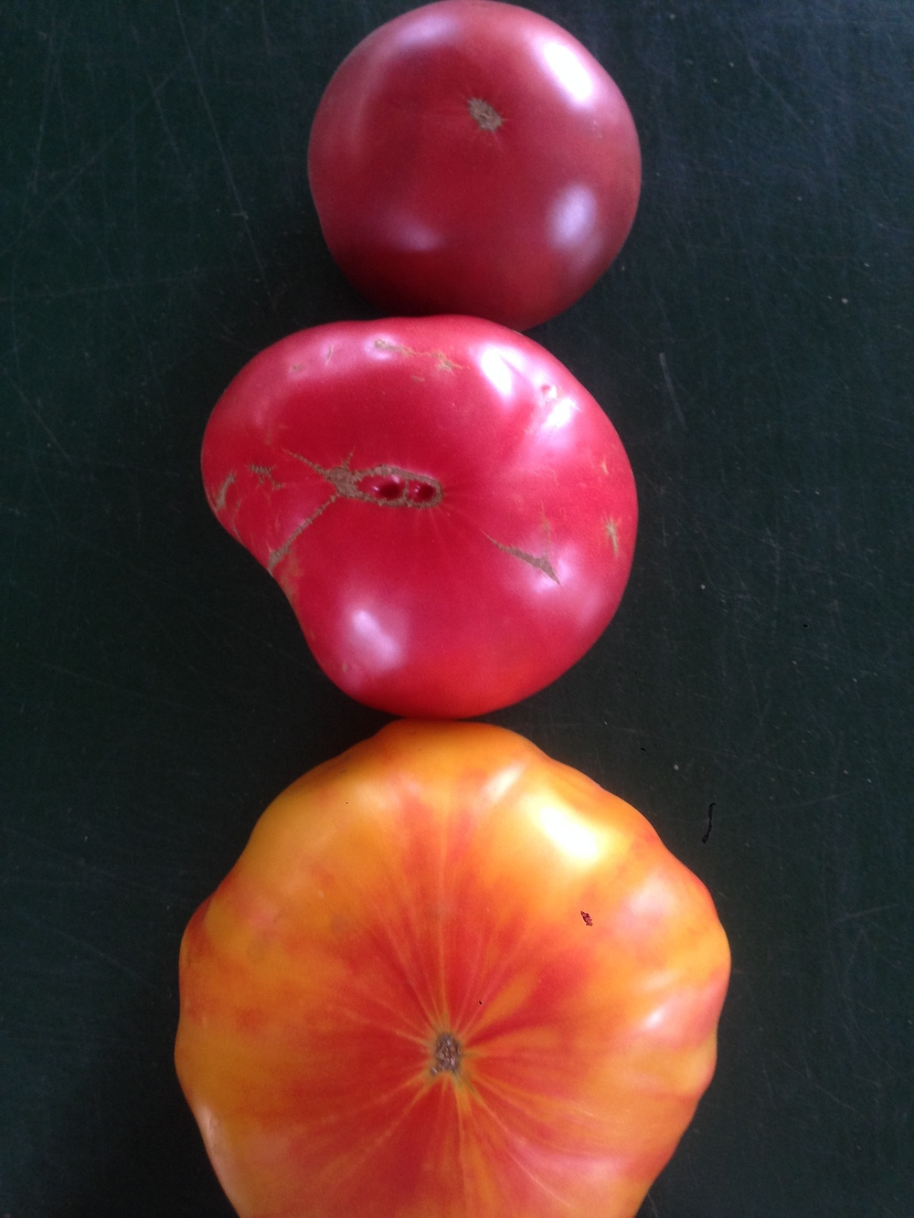 Heirloom tomatoes in the farm store and CSA this week